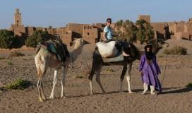 explore_desert