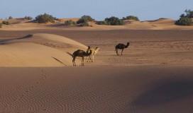 explore_desert_15